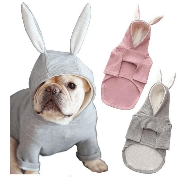 cute dog jacket