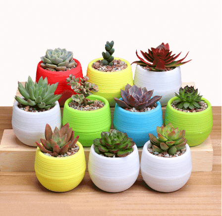 plants for wedding gifts